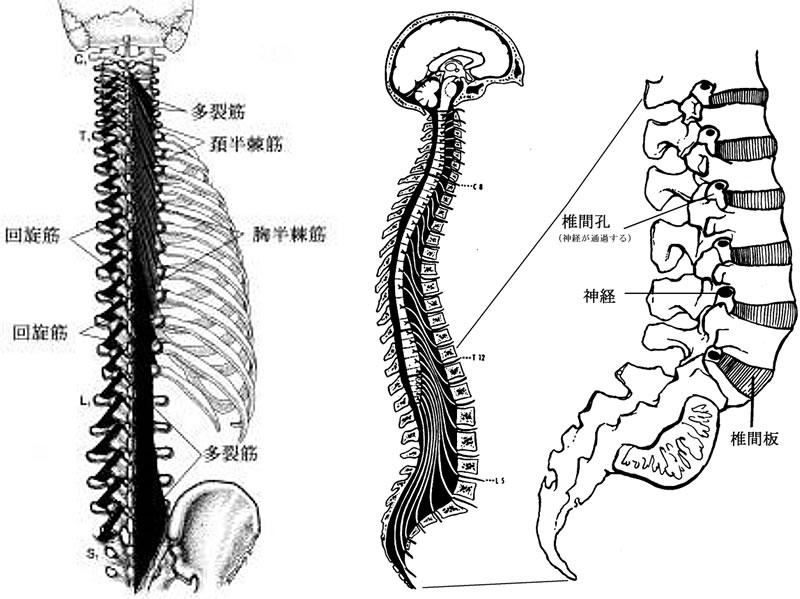 神経根障害(ラディキュロパシー)
